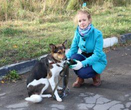 Около 2000 собак стерилизовали в Петрозаводске с помощью гранта