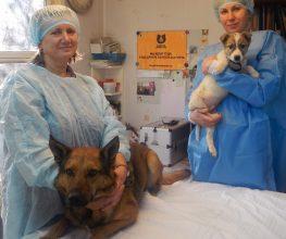 Вести Карелия о нашем уникальном проекте стерилизации собак в Петрозаводске