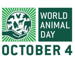 Forgotten Animals for World Animal Day