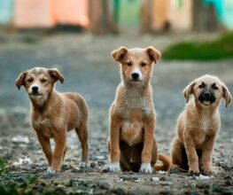 US friends can now support Forgotten Animals tax-free!